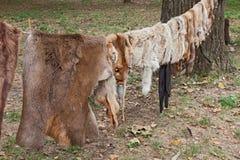 Lösa djura hudar Arkivbild