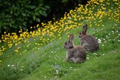 Lösa kaniner och blommor Royaltyfri Fotografi
