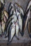 Låsfisk i marknaden, slut upp Fotografering för Bildbyråer