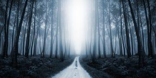 Läskiga Misty Road i skogen Arkivfoton
