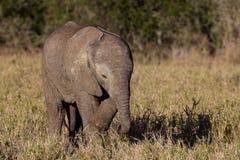 Löst behandla som ett barn den afrikanska elefanten Arkivbild