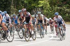 LTDL 2015 Royalty Free Stock Photography
