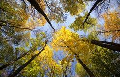 låter vara den ljusa färgskogen för hösten solljus Arkivfoto