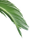 låter vara palmträdet Royaltyfri Foto