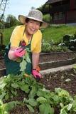 Ältere Frauengartenarbeit Lizenzfreie Stockfotografie