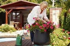 Ältere Frauengartenarbeit Stockfoto