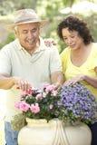 Ältere Paare, die zusammen im Garten arbeiten Stockbilder