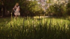 ?lterer Frauenlandwirt m?ht das Gras bei Sonnenuntergang stock footage
