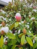?ltimas floraciones del invierno fotografía de archivo