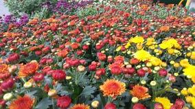 Últimas flores Foto de archivo libre de regalías