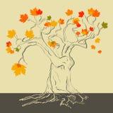 Ltree d'automne Photo libre de droits