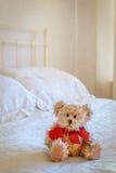 Lttle björn Fotografering för Bildbyråer
