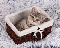 Lttle kitten sitting in a basket Stock Images