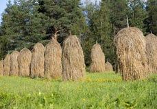 Luźny brogujący siano na letnim dniu obraz stock