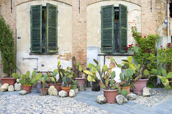 Lu Monferrato: old house facade. Color image. Lu Monferrato (Asti, Italy - September 1st, 2015: view of an old house facade, decorated with some cactus, in the Royalty Free Stock Photography