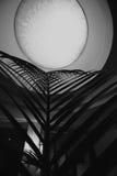 Lua abstrata na planta Foto de Stock