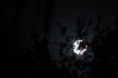 Lua atrás das árvores Imagens de Stock
