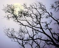 A lua atrás das filiais de árvore ilustração do vetor