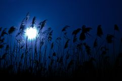Lua brilhante na noite Foto de Stock Royalty Free