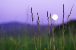 Lua cheia borrada que aumenta sobre montanhas de Altai, Cazaquistão, grama verde alta completamente vista na noite de verão Fotos de Stock