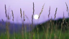 Lua cheia borrada que aumenta sobre montanhas de Altai, Cazaquistão, grama verde alta completamente vista na noite de verão Fotografia de Stock Royalty Free