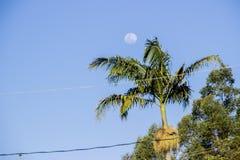 Lua cheia brasileira imagem de stock