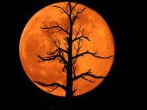 Lua cheia com planta inoperante imagem de stock royalty free
