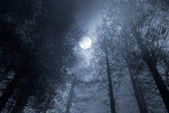 Lua cheia da floresta Imagens de Stock