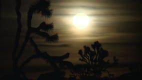 Lua cheia dourada que aumenta atrás de Joshua Tree - lapso de tempo filme