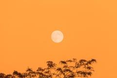 Lua cheia e árvore, espaço da cópia, céu alaranjado da noite Imagem de Stock