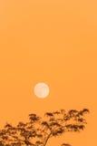 Lua cheia e árvore, espaço da cópia, céu alaranjado da noite Foto de Stock
