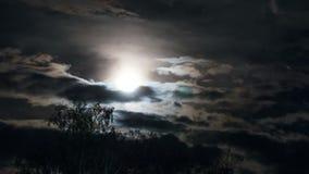 A Lua cheia move-se no céu noturno através das nuvens e das árvores escuras Lapso de tempo video estoque