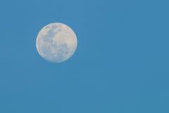 Lua cheia no crepúsculo Imagens de Stock