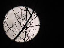Lua cheia que é vista através dos ramos de árvore Fotografia de Stock Royalty Free