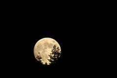 Lua cheia que aumenta atrás das árvores neste lapso de tempo espetacular imagens de stock