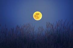 Lua cheia romântica sobre flores da grama Imagens de Stock
