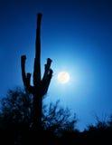 Lua cheia super com cacto do Saguaro Imagens de Stock Royalty Free