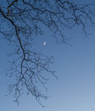 Lua crescente através das árvores fotografia de stock