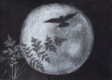 Lua da coruja e do tolo Silhueta Fotografia de Stock Royalty Free