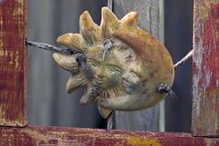Lua de Sun na madeira Fotografia de Stock