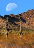 Lua do deserto Imagem de Stock Royalty Free