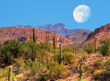 Lua do deserto Fotos de Stock Royalty Free