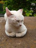 Lua do gato fotografia de stock royalty free