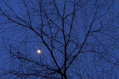 Lua do inverno com filiais de árvore Fotos de Stock