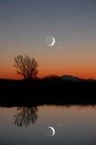 Lua do inverno e árvore solitária Imagens de Stock Royalty Free