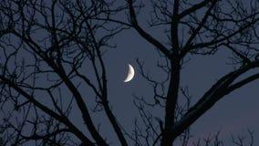 Lua dos jovens das árvores Imagem de Stock Royalty Free