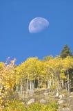 Lua e álamos tremedores imagem de stock