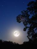 Lua e árvore Imagem de Stock Royalty Free