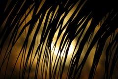 Lua e palmeiras Imagem de Stock Royalty Free