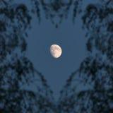 Lua e ramos na fôrma do coração Imagens de Stock Royalty Free